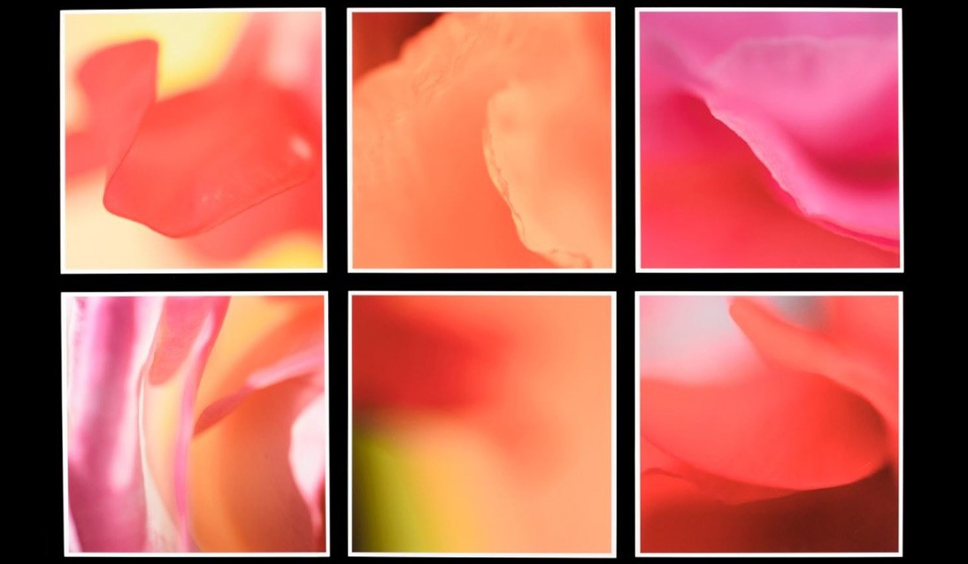 Six square frames filled with abstract, fluid shapes in pastel pink, peach and other warm tones.