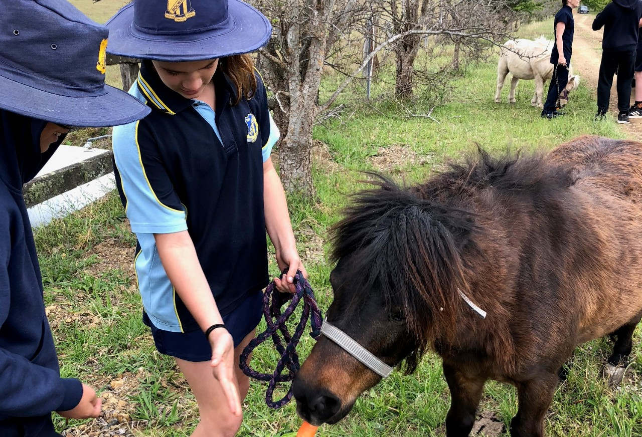 Two children in school uniforms feed a carrot to a pony
