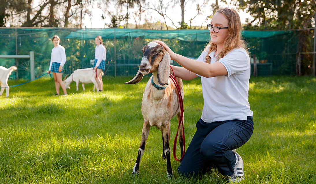 Female student kneeling on grass petting a goat. Two more students are in the background, also with goats.